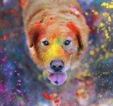 11 portrete adorabile de caini, de Jessica Trinh