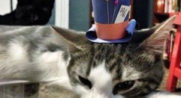 10 pisici cu palarie!