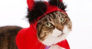 10 pisici in costume de Halloween