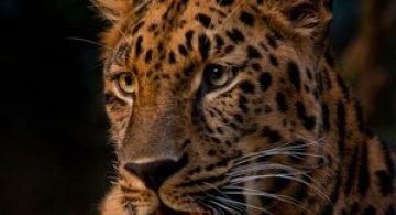 Portretist de animale: Joshua Arlington