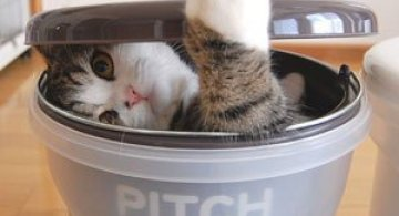 Cele mai haioase animatii cu pisici din 2013