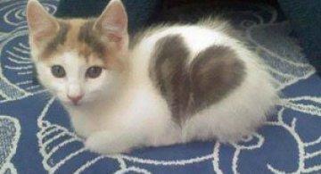 10 pisici celebre pentru blana lor