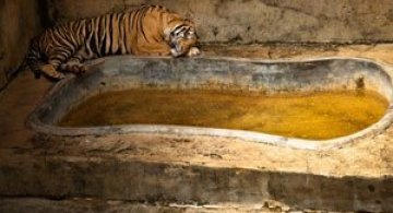 Cum traiesc animalele in captivitate?