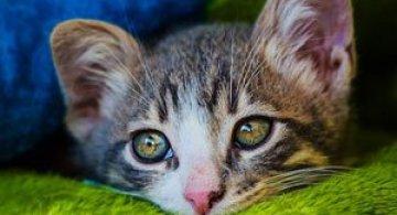 Micuta minune: Pisicuta salvata de fotograf