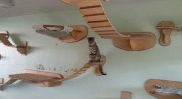 O camera de joaca numai pentru pisici