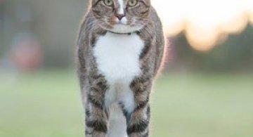 Didga, pisica pe skateboard, cucereste Australia