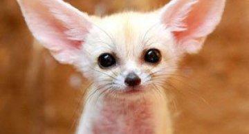 Cele mai simpatice animale mici din lume
