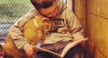 Copiii le citesc pisicilor fara adapost