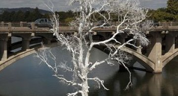 Copacul plutitor, din Austin, Texas