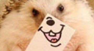 Cel mai simpatic arici, vedeta pe Internet