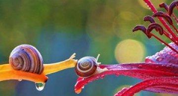 Fotografii din lumea magica a melcilor
