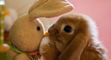 16 iepurasi adorabili de Paste