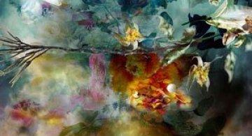 Portrete expresive de flori, de Isabelle Menin