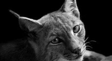 Portrete impresionante de animale, de Lukas Holas