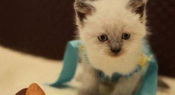 Pisici costumate in personaje celebre