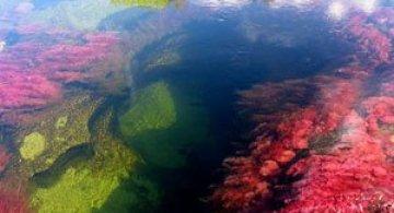 Raul curcubeu din Columbia: Cano Cristales