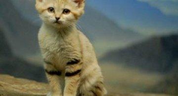 10 pui adorabili de animale