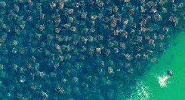 12 fotografii cu grupuri mari de animale