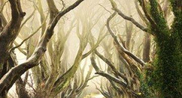 Drumul minunat din Irlanda de Nord: Dark Hedges