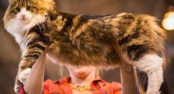 Cele mai frumoase pisici ale anului 2014
