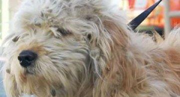 Tunsoarea care a salvat viata catelului Charlie