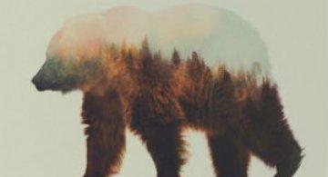 Frumuseti ireale: Cum se oglindeste natura pe trupul animalelor salbatice