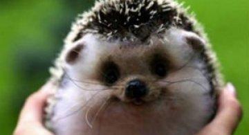 Cele mai fericite animale din lume care te fac sa zambesti