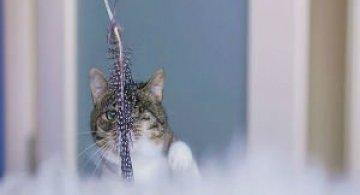 Cele mai frumoase pisici cu defecte fizice