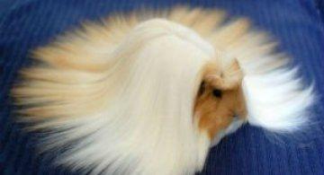 Cele mai paroase animale din lume
