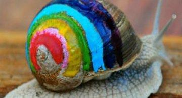 Cei mai colorati melci din lume