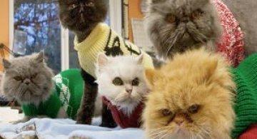 Cele mai batrane pisici adoptate de cei mai inimosi oameni