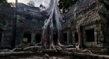 9 Copaci crescuti in cele mai ciudate locuri