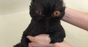 14 Poze hazlii cu animale care fac baie