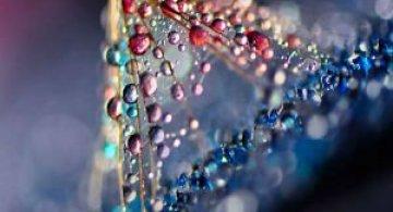 Grandoarea picaturilor de apa, in 11 fotografii macro