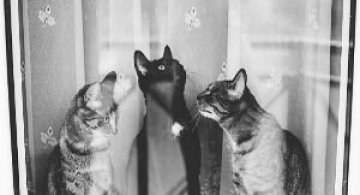Pisici in alb si negru: Cel mai vibrant pictorial cenusiu cu feline