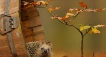 Toamna, bine ai venit: 15 portrete autumnale de poveste