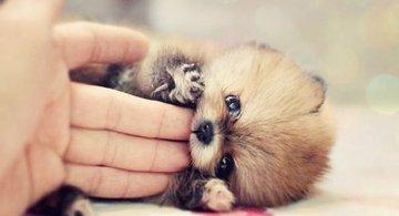 Unele mai dragalase ca altele: 14 Poze cu animale adorabile
