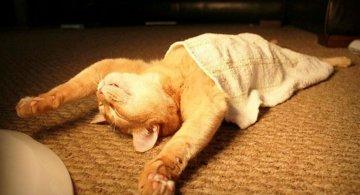 17 Pisici care dorm in cele mai haioase pozitii