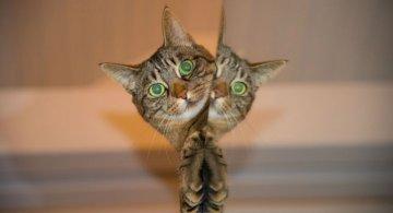 Cele mai haioase imagini animate cu pisici