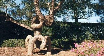 Povestea copacilor transformati in sculpturi vii
