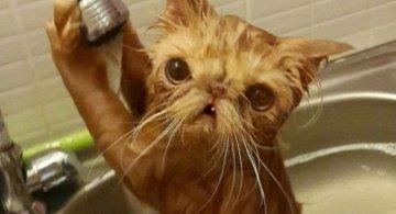 Pisici la apa, in poze haioase