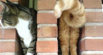 Altfel de poze cu pisici, in ipostaze haioase