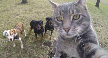 Manny, pisica zurlie care-si face selfie-uri