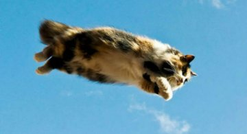 Pisicile zburatoare