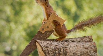O veverita poznasa, in cel mai haios pictorial