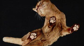 O parte nevazuta a felinelor: Pisici fotografiate de dedesubt
