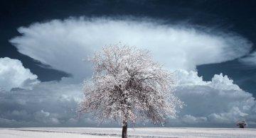 Frumustea desavarsita a copacilor din Polonia