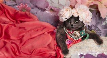 Cea mai cocheta pisica, in poze de colectie