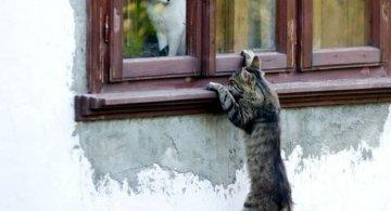 Pisici gata de Ziua Indragostitilor, in ipostaze romantice