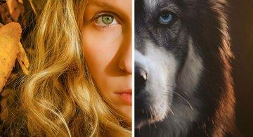 Povestea lui Kyro, un husky slavator